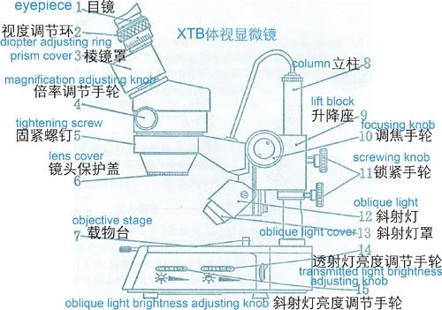xtb体视显微镜结构图